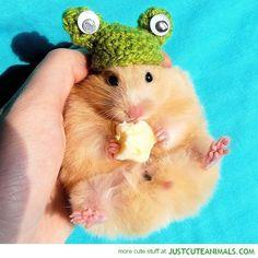 Tiny Frog Hat   Community Post: Tiny Hamsters Wearing Tiny Clothes