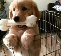 If I give this to you, can I come out? ==>http://www.amazingdogtales.com/gifts-for-golden-retriever-lovers/