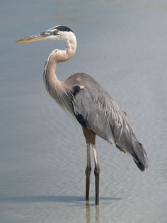 blue heron painting - Google Search