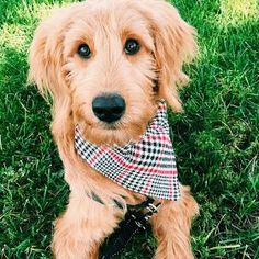 The Parker Project: Over-the-Collar Dog Bandana Tutorial