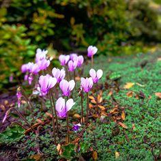Fall garden tip: brighten shaded spots