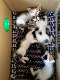 Kitten status: very sleepy after first taste of wet kitten food!