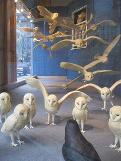 Owl window display in Oregon Owl Art, Bird Art, Vitrine Design, Store Displays, Window Displays, Retail Displays, Merchandising Displays, Owl Always Love You, Paperclay