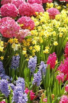 •.*.¸.*.♥ *.¸.*.• Welcome Spring.•.*.¸.*.♥ *.¸.*.•