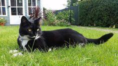 母猫再び。今日も生きんぞ。#猫 #catstagram #instacat #cat #ねこ #ねこ部 #ぬこ部