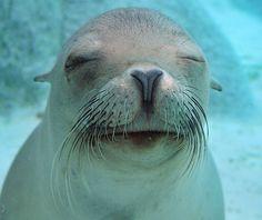 happy sleepy seal!