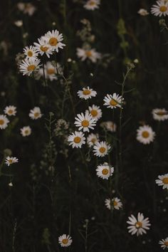 Moody Wildflower Print // 11x14 Living Room Art // Photo of Wild Daisies // Flower Fine Art // Moody Floral Photography