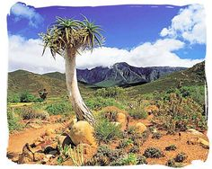Karoo National Park,...  The unforgiving and yet so awesome and dazzlingly beautiful landscape of the Great Karoo