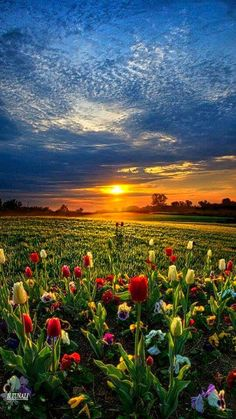 ✯ Lifetimes by Phil Koch --via>Nature Photography< *beautiful* Image Photography, Landscape Photography, Nature Photography, Spring Photography, Beautiful World, Beautiful Places, Beautiful Sunset, Amazing Nature, Belle Photo