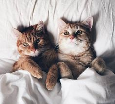 仲良しな二匹が成長していく姿が可愛すぎる!