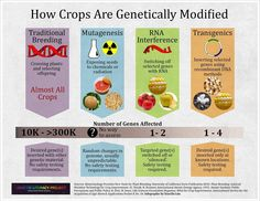 Fantastic infographic on genetic modification, by the The Genetic Literacy Project.