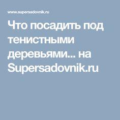 Что посадить под тенистными деревьями... на Supersadovnik.ru