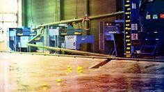 Book our Facility 24h/7 on Brecksvillebatting.com