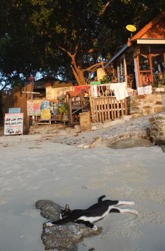 Chat sur la plage - Koh Samed