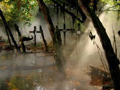 swamp cemetery