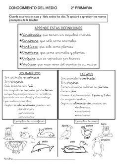 Recursos para el aula: Fichas de Conocimiento del medio para primaria. Fichas primaria para trabajar conocimiento del medio en primario, Action Verbs, Science And Nature, Second Grade, Social Studies, Elementary Schools, Cool Kids, Biology, Homeschool, Roman