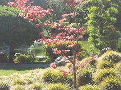 Japanese Friendship Garden in San Jose, CA