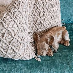 Sleeepppyyyy!!!! Our Golden Frenchies have been RESTOCKED!!!!! Recycled Timber Furniture, General Store, Perth, Shag Rug, Recycling, Rugs, Home Decor, Shaggy Rug, Farmhouse Rugs