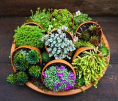 Loving the look of these layered succulents