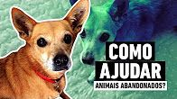 animais abandonados - YouTube