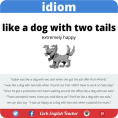 """Idiom: """"Like a dog with two tails"""" #learnenglish #idioms"""