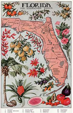 1912 Illustrated map of Florida. depicting the hot points of Florida with pictures added. A beautiful illustration that has been lovingly reproduced. Old Florida, Vintage Florida, Florida Style, Florida Girl, Florida Home, Florida Living, Florida Maps, Florida Travel, Florida Design