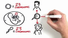 Excellent Video on #PGS and how it helps increase #IVF success rates at NCFMC