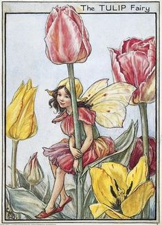 Illustration for the Tulip Fairy from Flower Fairies of the Garden. A girl fairy sits on a tulip leaf with her arms around the stem of the plant. Author / Illustrator Cicely Mary Barker
