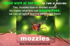 AUSSIE WORD OF THE DAY:  Yes, Aussies love to shorten words! No matter what you call MOSQUITOES, we can all agree that we can't stand them! #yankinaustralia #australia #aussielingo