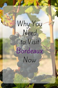 More than Just Wine: Why You Need to Go to Bordeaux Now