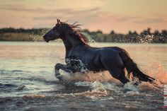 Horse by Vladlen Abdullin on 500px