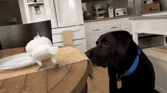 Share this Cockatoo Feeds Eggs to Dog Animated GIF with everyone. Gif4Share is best source of Funny GIFs, Cats GIFs, Reactions GIFs to Share on social networks and chat.