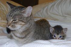 Loaf in traininghttps://i.imgur.com/UqwsLXd.jpg