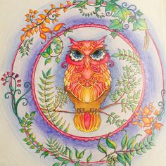 Owl From Johanna Basfords Enchanted Forest