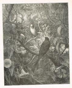 Philomèle et Progné (avant la lettre) - fable de Jean de La Fontaine illustrée par Gustave Doré - MAS Estampes Anciennes - MAS Antique Prints