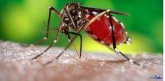 Top 5 Symptoms of Dengue
