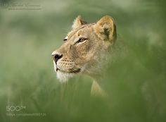 Emerging Queen - The Cat Family Inspiring Photography