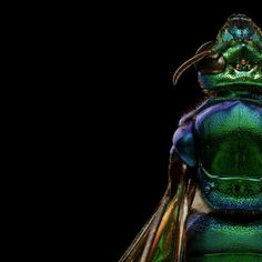 Explore the beauty of insects in astonishing detail, each created from around 8000 photographs taken by Levon Biss as part of the Microsculpture project.