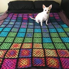 Bella makes the blanket um cuter. #chihuahua #chihuahuas #chihuahuaface #chihuahualife #chihuahualove #chihuahuasofinstagram #dog #dogs #dogsofig #dogstagram #dogsofinstagram #dogs_of_instagram #pet #pets #petstagram #petsofinstagram #pets_of_instagram #pup #puppy #puppies #puppylove #puppiesofinstagram #cute #crochet #crocheting #crochetblanket #crochetersofinstagram by superstarre