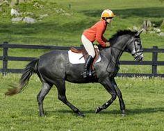 Jim Wofford: Jump in Balance at Any Speed | Practical Horseman