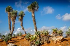 Cacti on a hill! by Colin.W.F.Smith