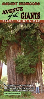 Avenue of the Giants- One of my favorite places Ive been. Magical HUGE trees. Reminds me of being in fairy gardens or someting. Very impressive. July 2014