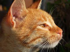 A street cat of Turkey