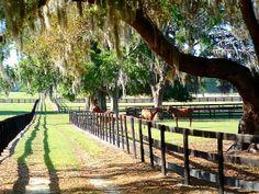 Ocala......the Heart of Florida