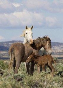Wild horse family.