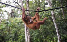 La sixième extinction de masse des animaux est sous-estimée
