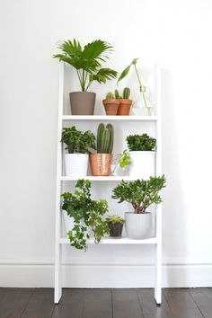 white leaning step ladder blends into white wall so only see the plants, minimal