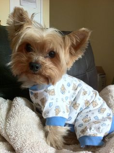 9 Insanely Adorable Puppies In Pajamas #yorkie
