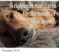 God Loves You. likes · 1 talking about this. God Loves You, A place for Inspiration, sharing and Prayers Click like or Share to help spread Gods. Dog Quotes, Animal Quotes, Bible Quotes, Dog Poems, Adult Quotes, Dog Sayings, Lovers Quotes, Pregnant Horse, I Love Dogs