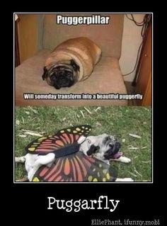 hee hee hee :)